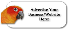 Advertise with PuertoRicanPainter.com